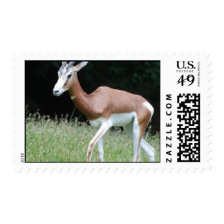 Mhorr Gazelle Postage Stamp