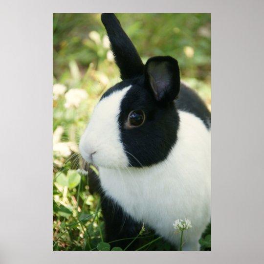 MHRR Dutch black & white bunny rabbit wall poster