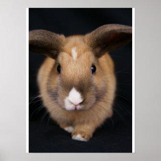 """MHRR poster del conejo conejito Honeybadger 18x24"""""""