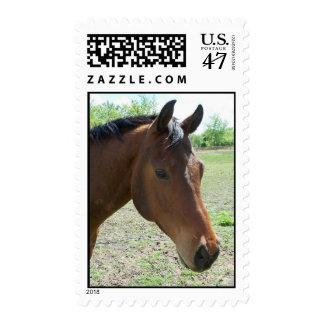 Mi amigo, el caballo estampilla