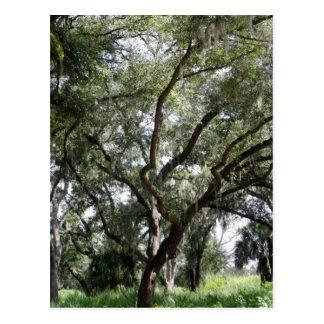 Mi árbol misterioso postal