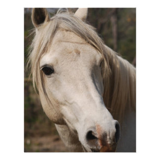 Mi cara del caballo membretes personalizados