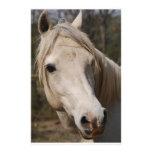 Mi cara del caballo papelería de diseño