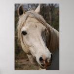 Mi cara del caballo poster
