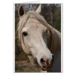 Mi cara del caballo tarjetón