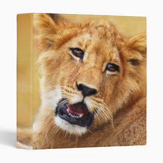 Mi cara linda de los leones