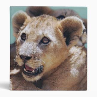 Mi cara linda del león