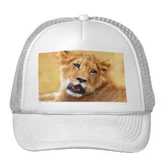 Mi cara linda del león gorras