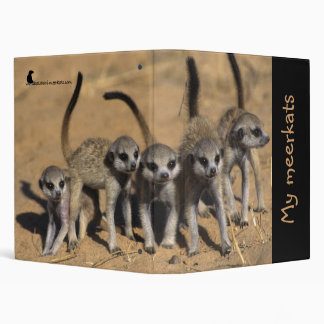 Mi carpeta de Meerkats