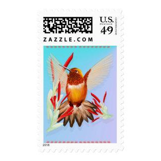 Mi colibrí soleado