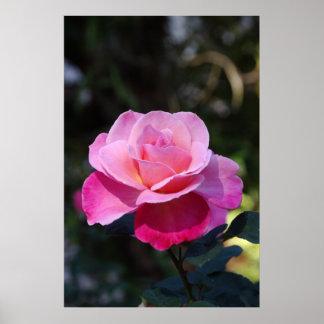 Mi color de rosa dulce póster