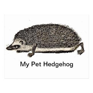 Mi erizo del mascota postales
