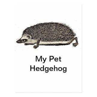 Mi erizo del mascota tarjeta postal