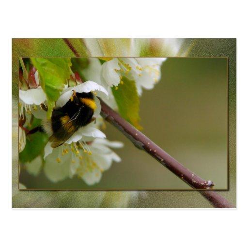 Mi flor tarjetas postales