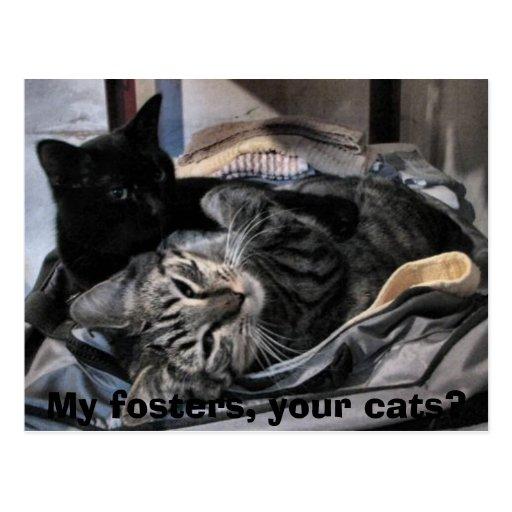 ¿Mi fomenta, sus gatos? Tarjeta Postal