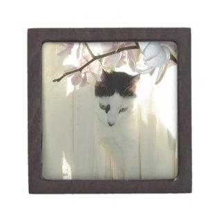 Mi gato blanco y negro bonito del gatito caja de joyas de calidad