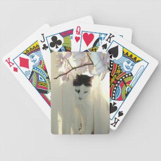 Mi gato blanco y negro bonito del gatito barajas