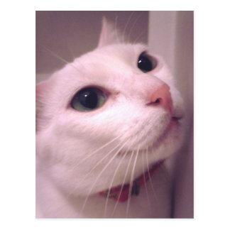 Mi gato de Milonga Tarjeta Postal