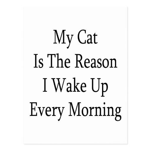 Mi gato es la razón que despierto cada mañana postal
