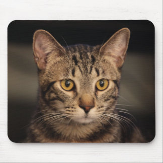 Mi gato Matt Damon Tapetes De Raton