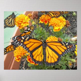 Mi Mariposa-poster del monarca