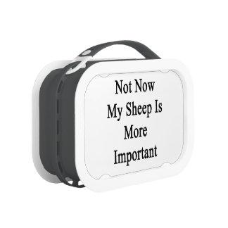 Mi oveja es más importante no ahora