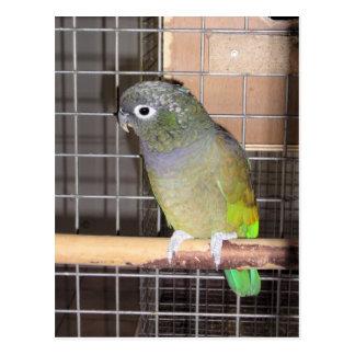 Mi pájaro postales