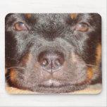 Mi pequeño Rottweiler Tapetes De Raton