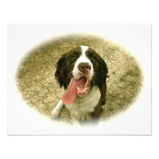 Mi perro de aguas fiel comunicados personales
