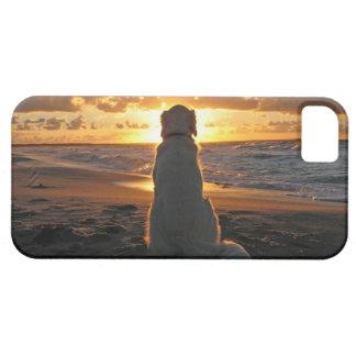 Mi perro iPhone 5 carcasa
