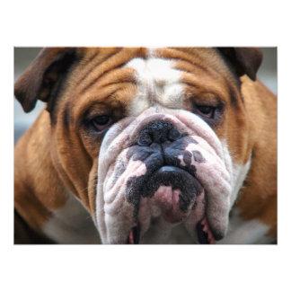 ¡Mi perro gruñón está diciendo el dogo