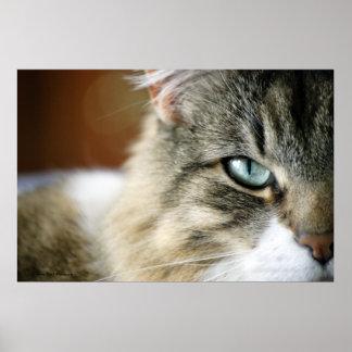 Mi poster del ojo de gatos
