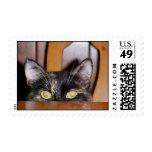 Mi sello del gato del gatito