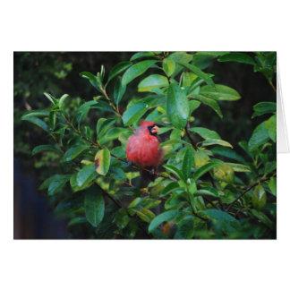 Mi tarjeta del cardenal de las virtudes