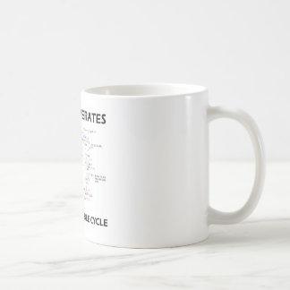 Mi vida actúa en un ciclo fiable (Krebs) Tazas De Café