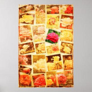 Mi vintage color de rosa inmarcesible del collage  póster