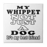 Mi Whippet no apenas un perro Teja