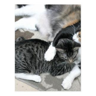 Mia & Gizmo Postcard