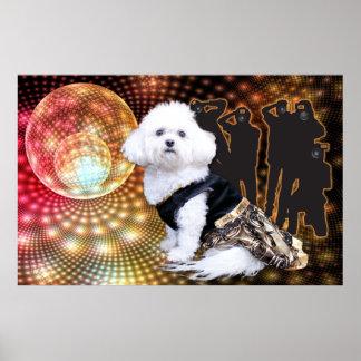 Mia - una foto del Año Nuevo de Bichon Frise enero Poster