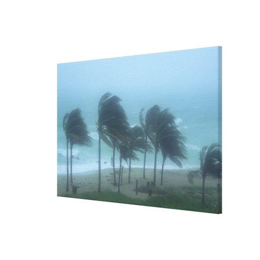 Miami Beach, Florida, hurricane winds lashing Stretched Canvas Prints