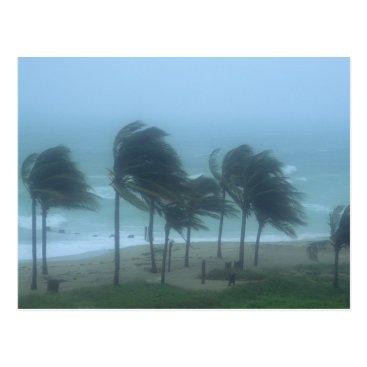 DanitaDelimont Miami Beach, Florida, hurricane winds lashing Postcard