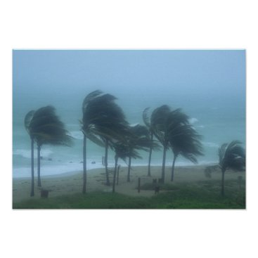 DanitaDelimont Miami Beach, Florida, hurricane winds lashing Poster