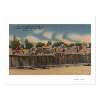 Miami, FL - Greyhound Dog Race at Kennel Club Post Card