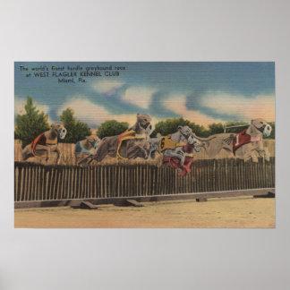Miami, FL - Greyhound Dog Race at Kennel Club Poster