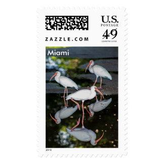 Miami Florida 3 Ibises Postage Stamp