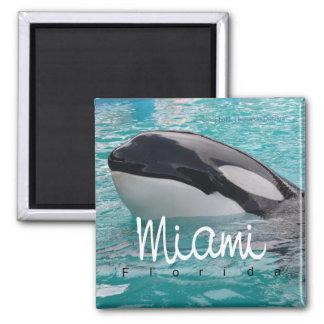 Miami Florida Orca Whale Photo Fridge Magnet