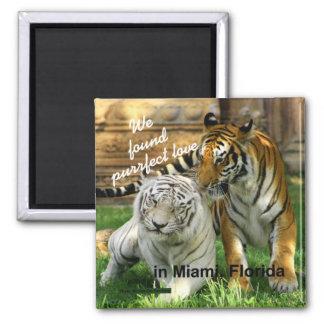 Miami Florida Purrfect Love Tiger Fridge Magnet