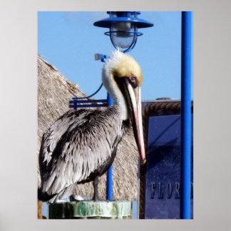 Miami Pelican Poster