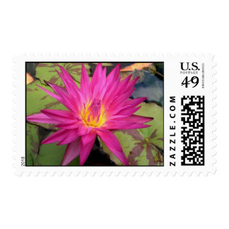 Miami Rose Stamps
