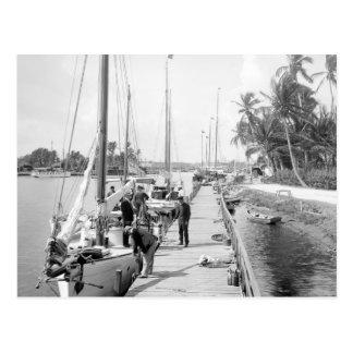 Miami Sailboats, 1905 Postcard